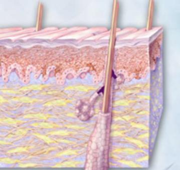 Dermatological product manufacturer